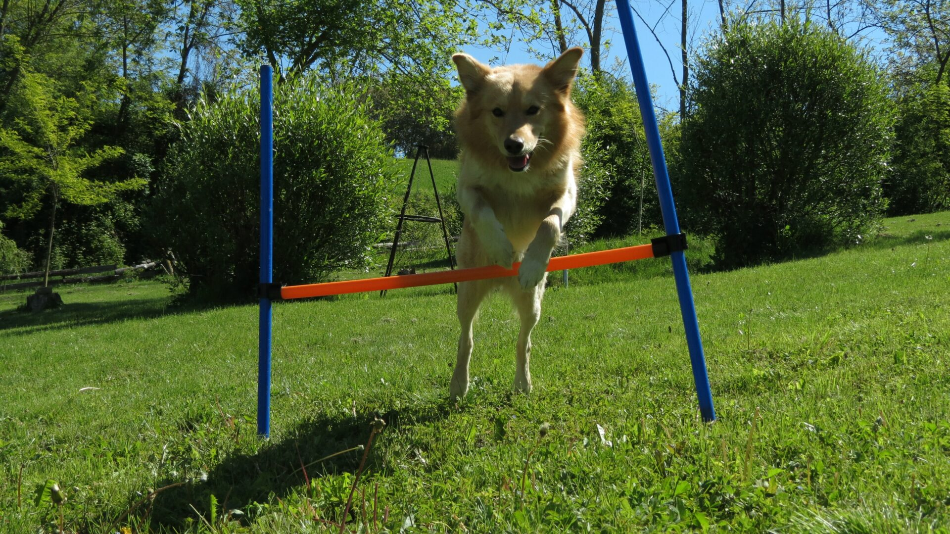 Agility in Cascina Madia