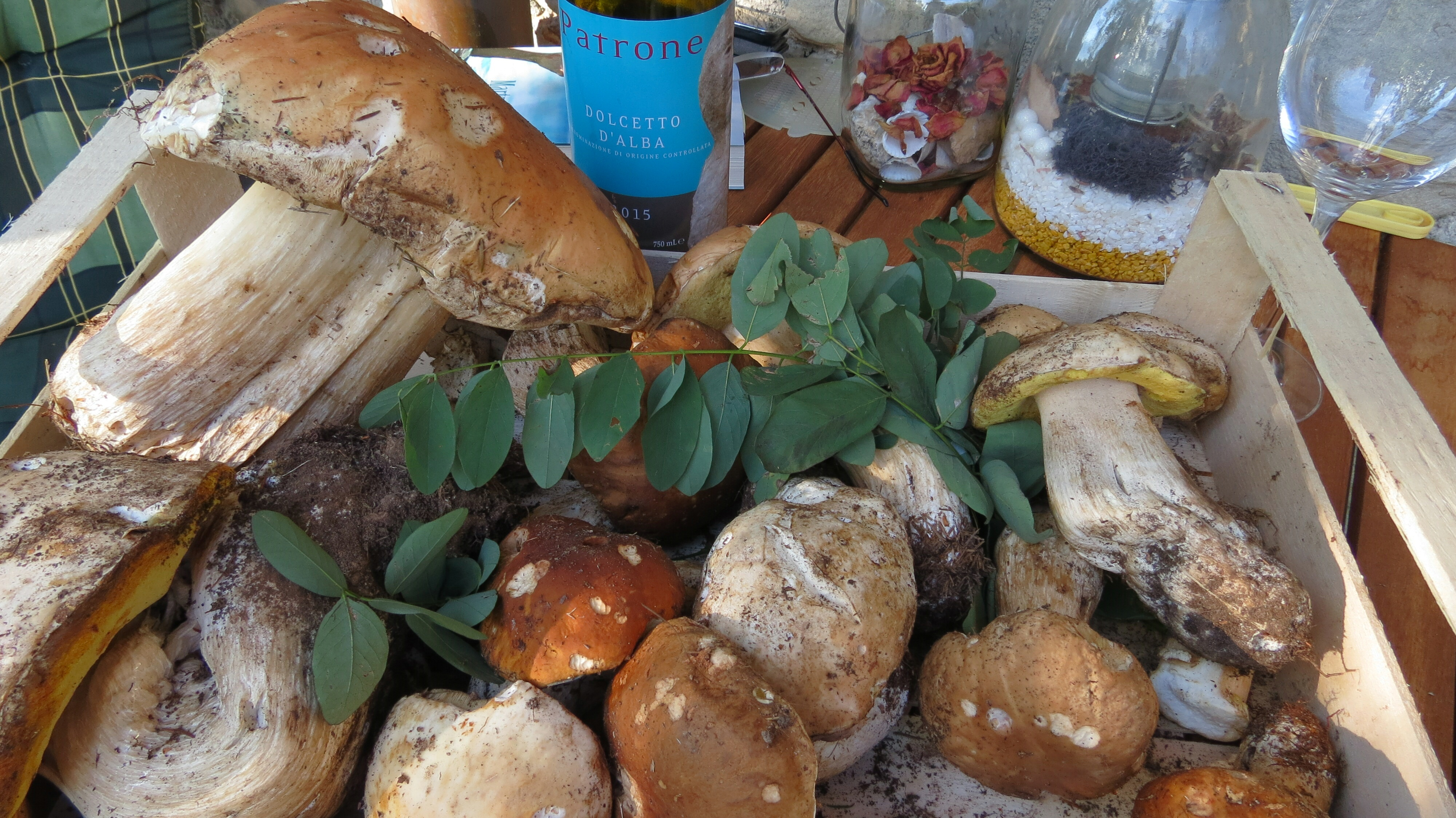 Steinpilze – funghi porcini –