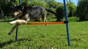 Sportlicher Urlaub mit Hund in der Cascina Madia.
