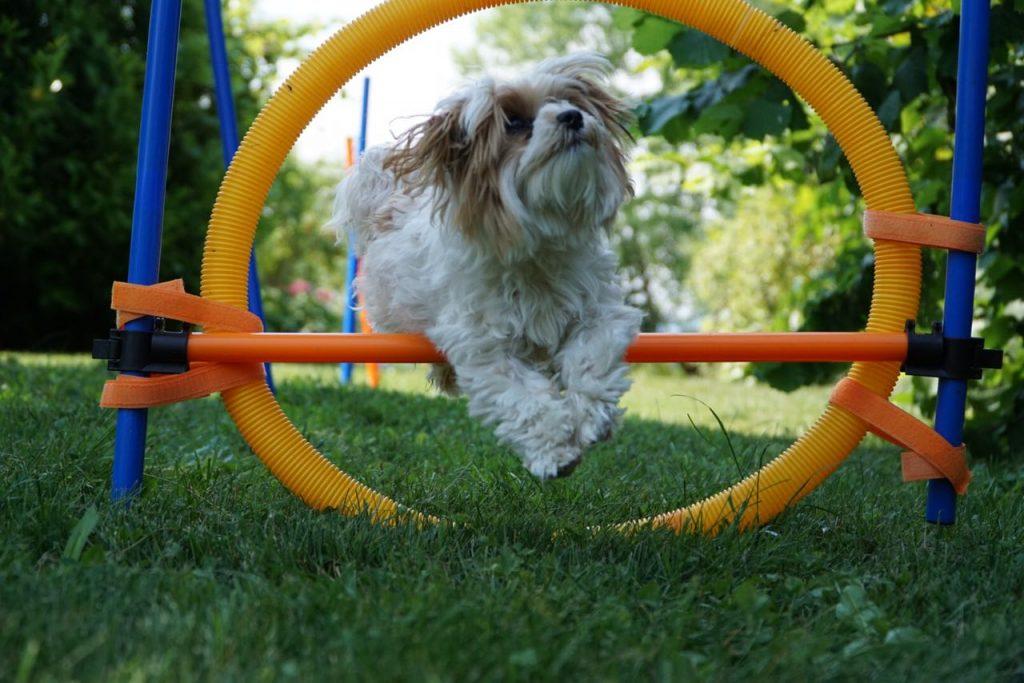 Gasthund Nelly beim Hundesport