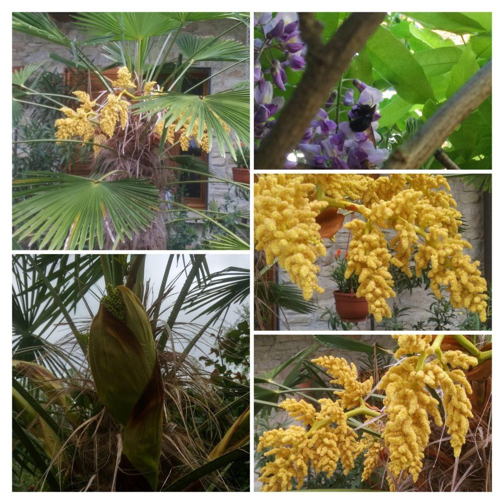 Unsere Palme Auf Der Terasse Blüht …