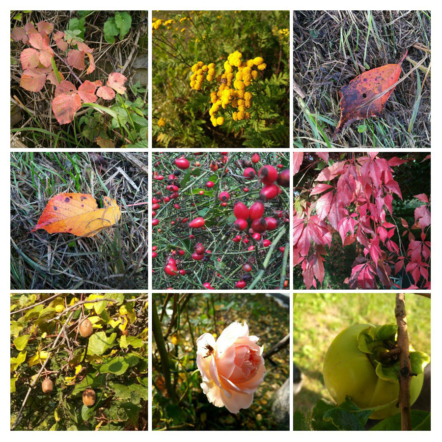 Herbst In CM